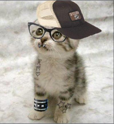 kucing gaul